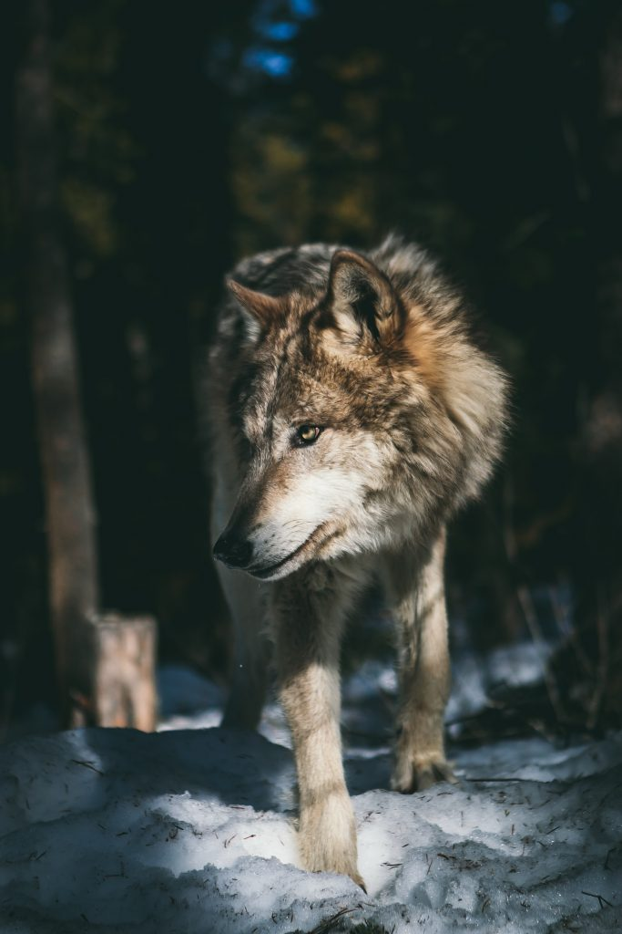 When homeschooling, embrace being a lone wolf if you are alone on this path.